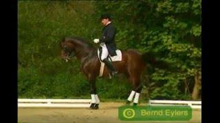 Horses - lose control
