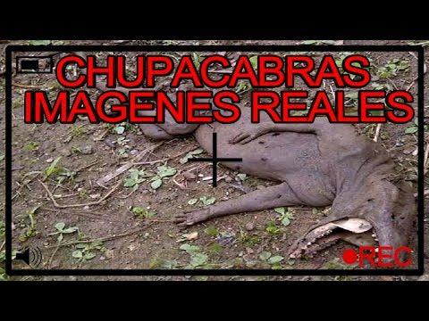 Resultado de imagen para el chupacabras en bolivia