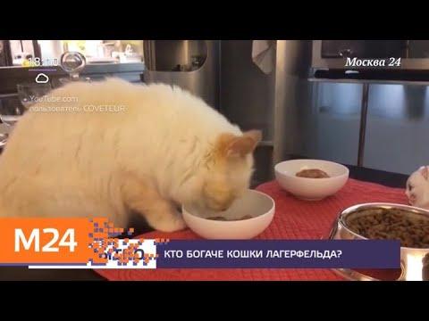 Кошка Лагерфельда унаследует часть его состояния - Москва 24