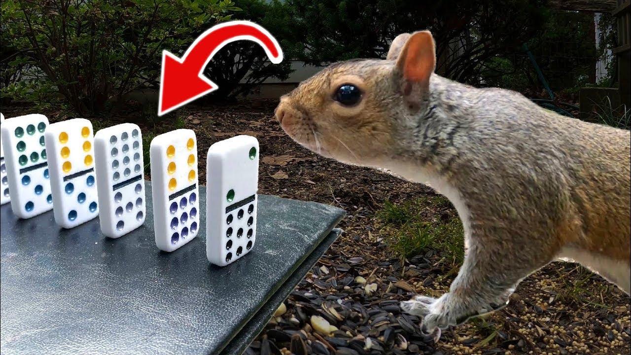 The Squirrel Feeding Machine (Rube Goldberg Machine) | Creezy