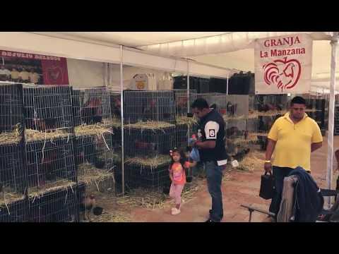 Stan de Granja La Manzana en el The Golden Rooster 2018