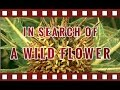 In Search of a Wild Flower