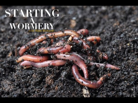 Tackle Room Tips - How To Start A Wormery - Rikki Richards