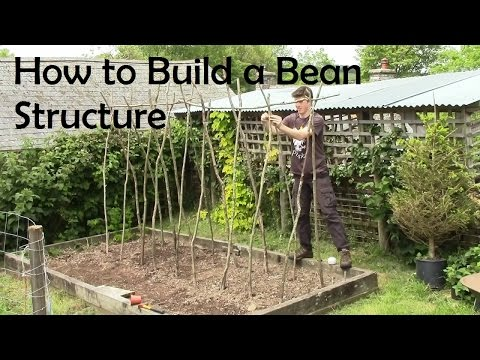 How to Build a Strong and Sturdy Bean Structure