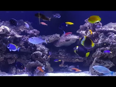 Fish only 600l doovi for Fish only saltwater tank