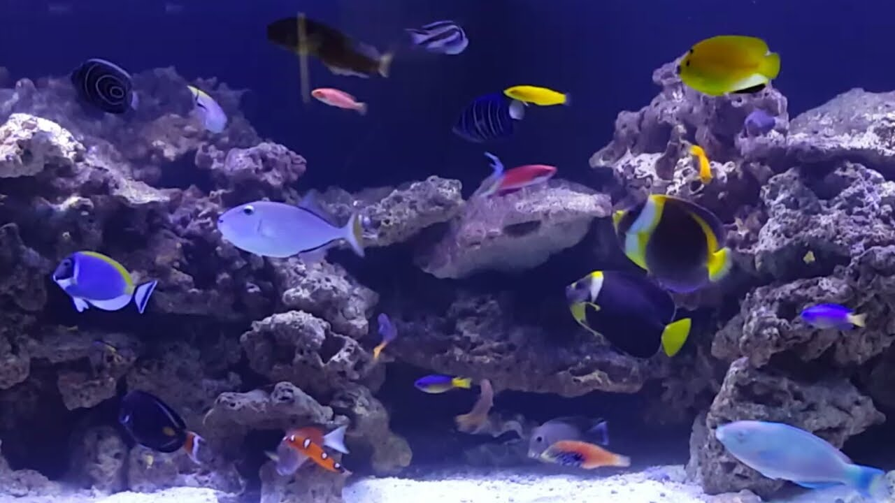 225 gallon fish only saltwater tank youtube for Fish only saltwater tank