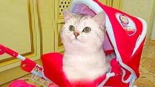 ПРАНКИ над СИМКОЙ Видео для детей Розыгрыши и Party для Кошечки Kittens Prank Настюшик и Симка