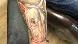 Michael Da Bear Tattoo Aberdeen - Portrait Of A Dog (bull Terrier)