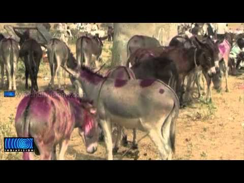 Asia's largest donkey fair in Jaipur attracts Traders