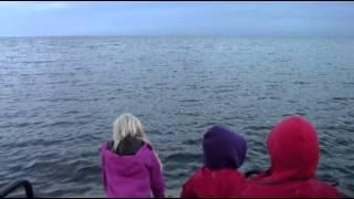 Sälsafari med High Coast Sea i Världsarvet Höga Kusten