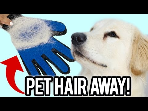 Can This Stop Pets From Shedding? Testing WEIRD Pet Gadget!
