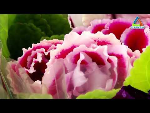 (JC 21/05/18) Shopping sedia Mostra de Flores de Holambra