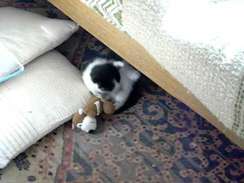 Download BidiDou le petit chaton joue avec son nounours...