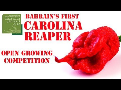 مسابقة زراعة فلفلة الكارولاينا ريبر - Carolina Reaper Growing Competition