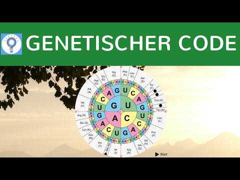 genetischer code code sonne gensonne eigenschaften der genetische code einfach erkl rt. Black Bedroom Furniture Sets. Home Design Ideas
