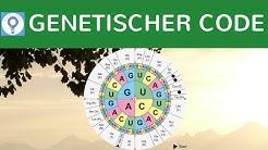 Genetischer Code - Code Sonne / Gensonne & Eigenschaften - Der genetische Code einfach erklärt