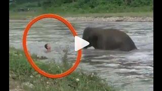Слоны.  Шок!!! Что они творят!! Elephants!! Shocking video