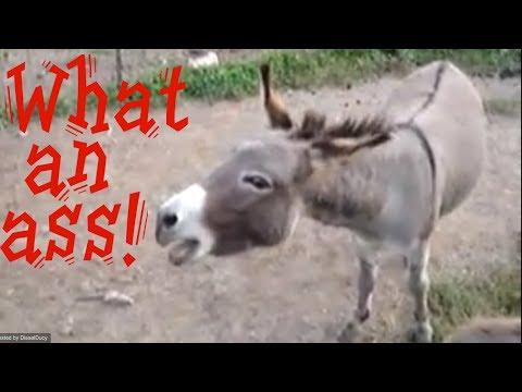 a real ass (a donkey)