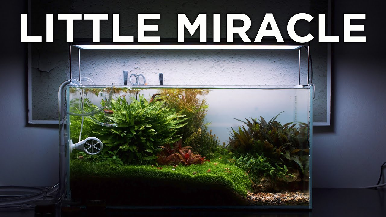 Little Miracle A Thecinescaper Inspired Aquarium Relaxing Aquascaping Video Youtube