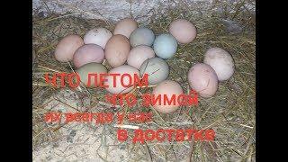 Мои маленькие секреты для высокой яйценоскости зимой