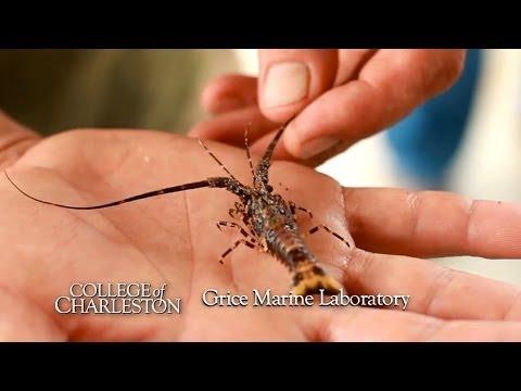The Grice Marine Laboratory -- College of Charleston