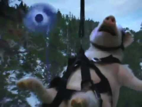 Geico Commercial Parody - Zipline Piggy - YouTube