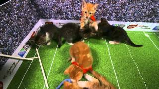 The Kitten World Cup 2015 | Prance vs The All Cats