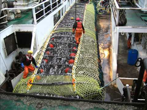 Pollock Fishing in the Bering Sea, Alaska