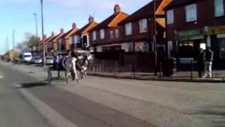 Turbinia Horse Drive :D