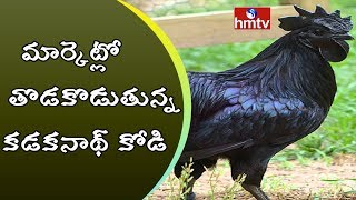 Huge Demand to Kadaknath Chicken | Special Story on Kadaknath Hen | HMTV