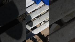 Comment soigné sa poule ou son coq du corysa