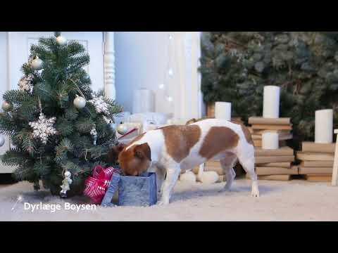 Julehilsen fra Dyrlæge Boysen