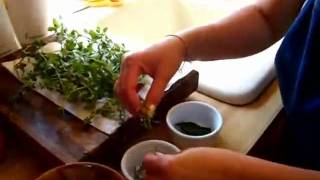 Washing The Herbs For Ramona's Thai Basil Pasta Sauce Part 6 Of 12