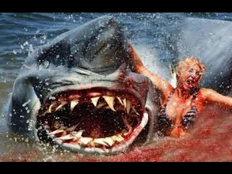 Requin ultra violent danger youtube - Photo de requin tigre a imprimer ...