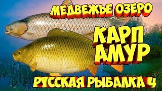 русская рыбалка 4 Карп Амур Медвежье озеро рр4 фарм Алексей Майоров russian fishing 4