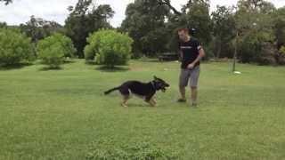 Cedar Park, Tx Dog Training. Ryu Changing Positions