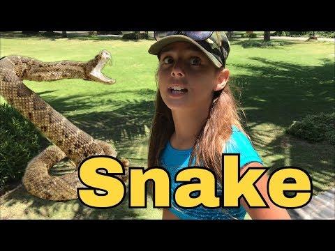 almost BITEN by SNAKE 🐍 VIETNAM Travel vlog - LivCATion