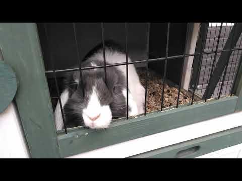 Mijn konijnen deel 2