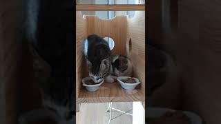 폴리몰리 이야기~♡ 유기묘고양이 두마리 입양(폴리몰리 …