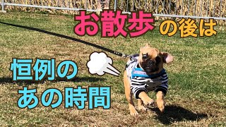 フレンチブルドッグ フレブル 【LOCO(ロ...