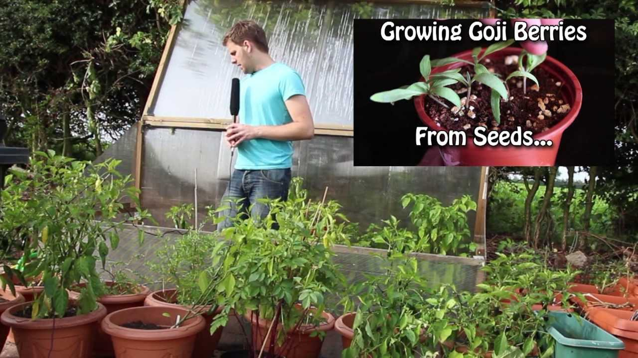 Greenhouse Garden Planner on greenhouse landscaping, greenhouse cucumbers, greenhouse tomato, greenhouse horticulture, greenhouse vegetable gardening, greenhouse plants, greenhouse home, greenhouse gardener,