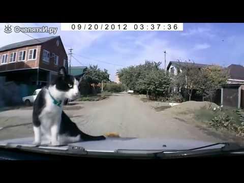Вопрос: Почему кошки сидят под автомобилем?