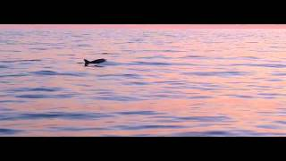 Excursion Sunrise and Dolphins in Mallorca