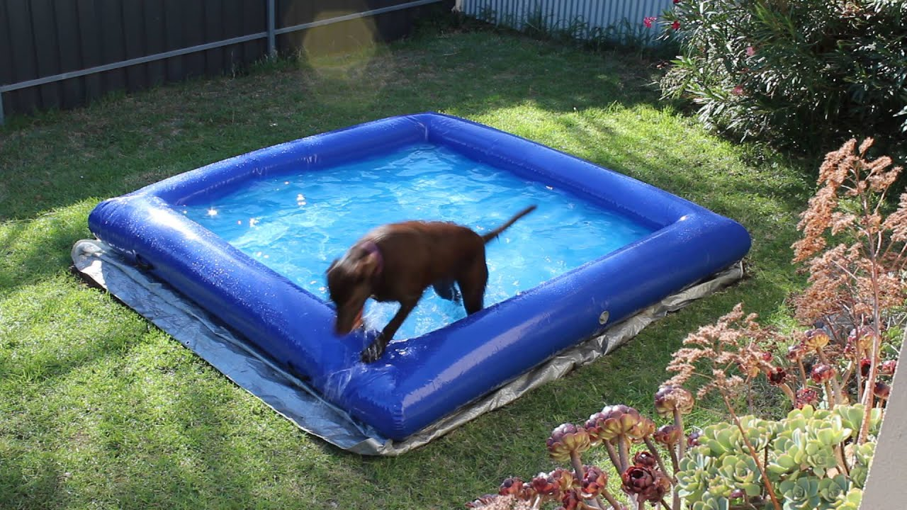 Dog Pool Large Indestructible Inflatable Dog Pool Doovi