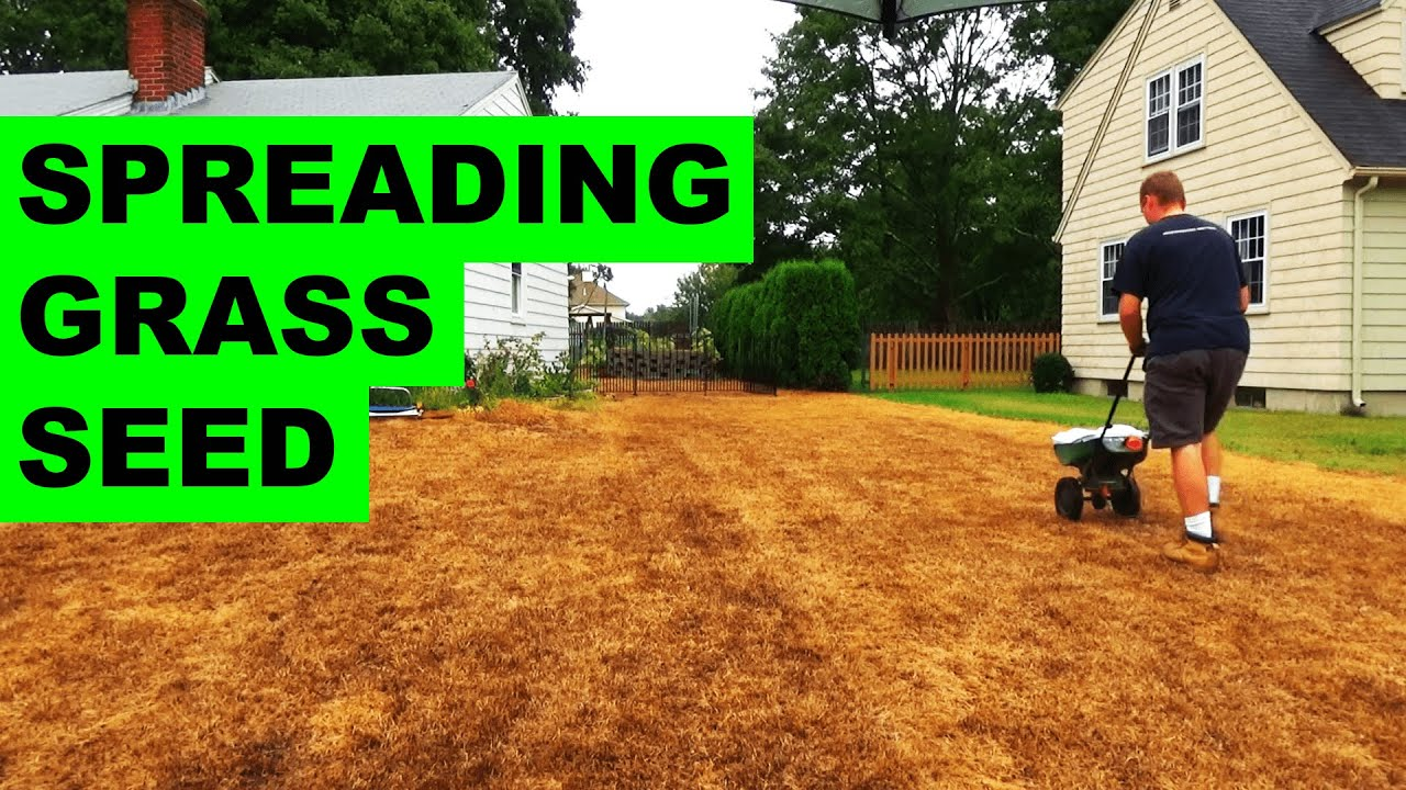 How To Plant Gr Seed