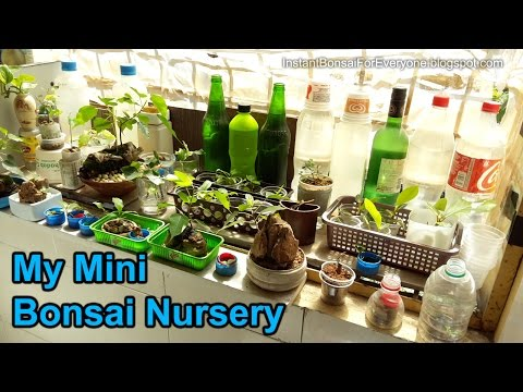 Tour of my mini bonsai nursery - Kitchen area