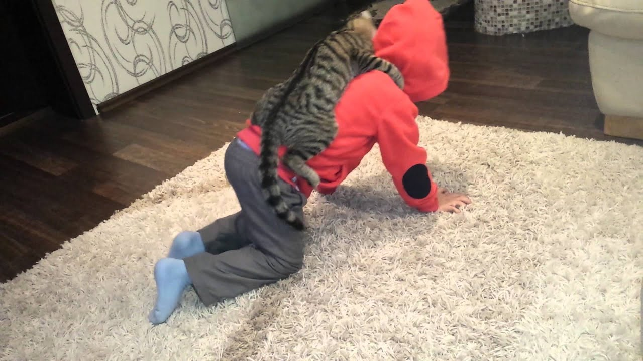 Кошка ковбой