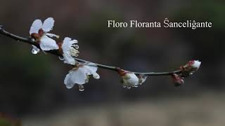 05 | Deklamado de Hejna – Floro Floranta Ŝanceliĝante | 흔들리며 피는 꽃 – 에스페란토