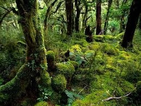 Rainforest documentary 2017 secrets of an african jungle youtube rainforest documentary 2017 secrets of an african jungle sciox Image collections