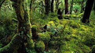 Rainforest Documentary 2017 - Secrets of an African Jungle